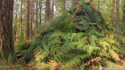 Build a bushcraft shelter