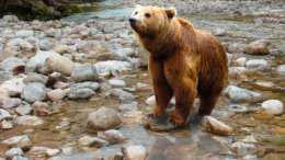 Bear Food Storage Camping