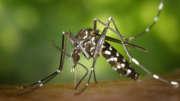 natural insect repellent recipies