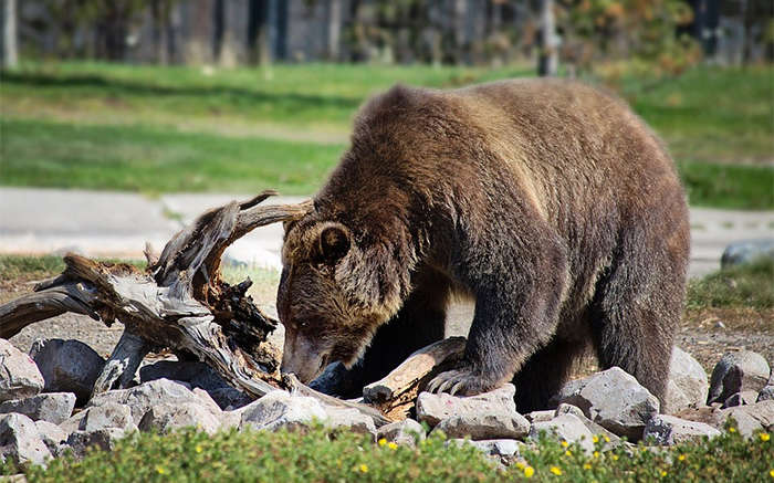 Bear Safety for camping