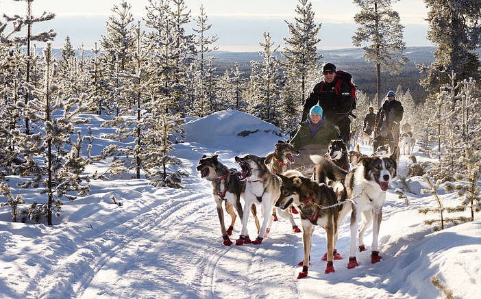 dog sled tours in montana